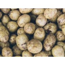 Pomme de terre blanche BIO - 1 kg