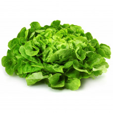 Salade feuille de chene BIO